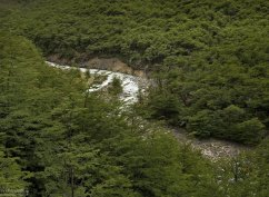 Серебристая река Ascencio.