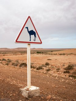 Знак, предупреждающий о появлении верблюдов в марокканской хаммаде (каменистой пустыне).
