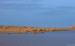 Стаи птиц слетаются к воде.