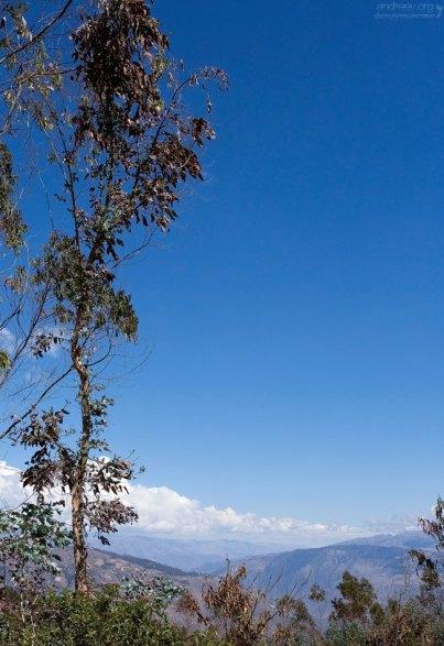Лиственные деревья по обочинам дороги.