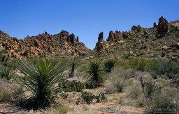 Кусты сотола и кактусы на плоской части тропы Grapevine Hills trail.