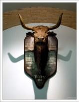 Голова коровы Ислеры - матери быка, смертельно ранившего Манолете. Музей корриды.