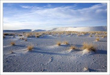 Песок удерживается на месте корнями растений.