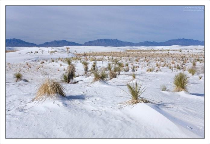Белый песок, юкки и горы San Andres Mountains на горизонте.