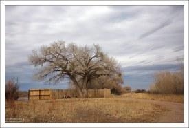 Одно из укрытий (blinds) - заборы или небольшие избушки с бойницами, через которые удобно наблюдать за пугливыми птицами.
