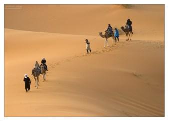 Верблюды - твари неторопливые, поэтому поднимаются на дюны нога за ногу.