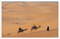 На верблюде тяжело сидеть больше 20 минут с непривычки - задница затекает.