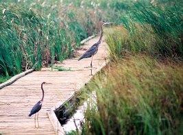 Две охотницы. Sea rim state park, Техас.