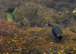 Мелкие рыбки у пирса в поселке Maalaea.