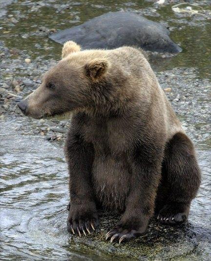 Медведь с самым модным маникюром.
