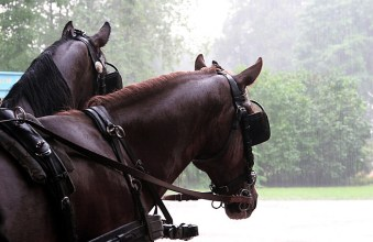 Лошади под летним дождем.