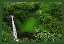 """""""Мощь джунглей"""". Зачастую растительность в джунглях такая плотная, что не видно где обрывается плато. Помогает ориентироваться только шум водопадов."""