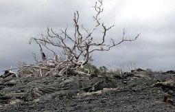 Растительность после извержения.