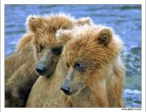 Близнецы. Двое маленьких медвежат посреди реки в ожидании мамы с добычей. Медвежата очень устали, один даже заснул. На этом месте они провели около 4 часов.