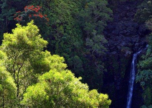 Водопад с почти непроизносимым названием Пуохокамоа и тюльпанное дерево.