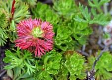 Разноцветный мох на склоне гор Kenai Mountains.