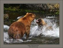 """""""Размер имеет значение"""". Медведь-трехлетка, т.е. подросток, делает вид, что нападает на самого главного и массивного медведя на водопаде (альфа-самца). Нужно это было трехлетке, чтобы завоевать авторитет своей компании, состоящей из трех молодых медведей. Видно было, насколько он боится подходить близко к туше альфа-самца, и даже страшное демонстрирование пасти всего лишь показуха. Большой спокойно стоял на месте, изредка порыкивая, чтобы молодежь не сильно выпендривалась. Никаких ответных действий не предпринимал, понимая, что в медвежьем мире размер имеет значение."""