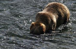 """Медведь - """"подводная лодка""""."""