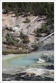 Склоны Заднего бассейна с поваленными деревьями.