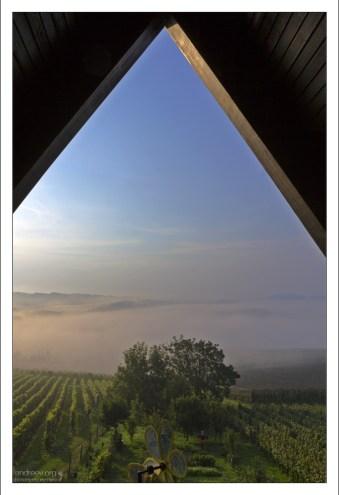 Вид с террасы дома на виноградник.