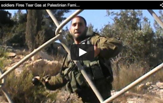 Raccogliere olive vicino al muro… gas!
