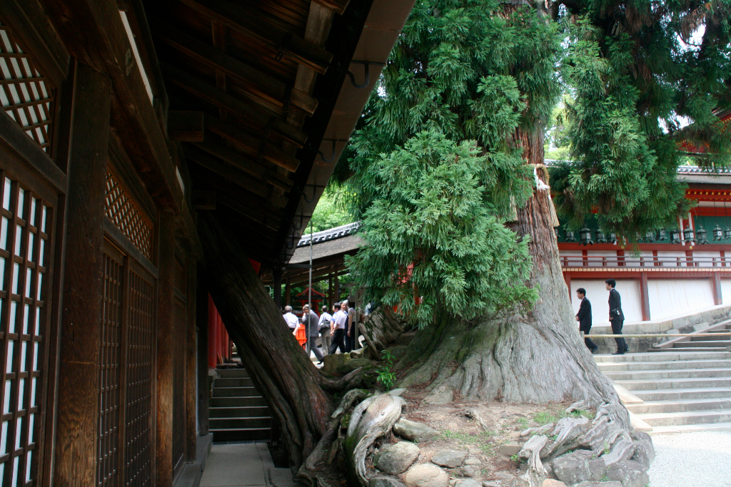 Tree inside the temple