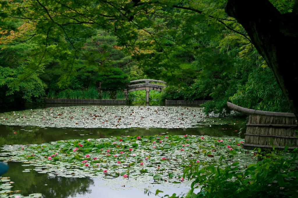 Huge pond at Kyoto's Golden Pavilion