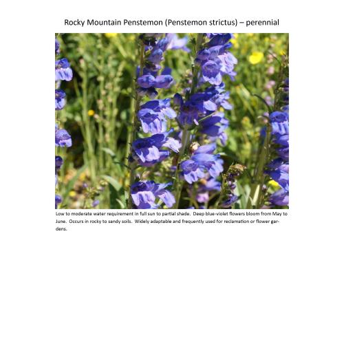 Medium Crop Of Rocky Mountain Penstemon