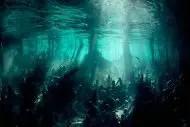 Bosque sumergido