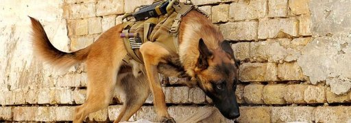 animals-workers-military-tools