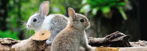 rabbits-animal-ethics