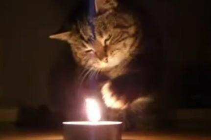 恍惚な表情で火遊びするネコ
