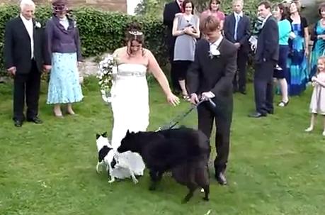 ウェディングドレスにオシッコをひっかける犬