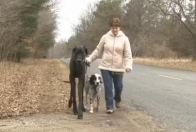 世界一背の高い犬ギネス記録のグレート・デーン