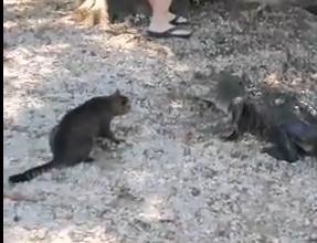 猫パンチでワニを撃退したニャンコ