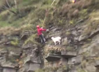 崖で身動きが取れなくなったヤギのレスキュー