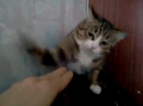 ウルトラ高速連打猫パンチ