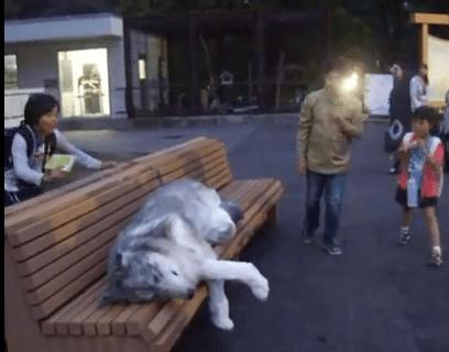 ベンチに横たわる巨大なワンコ