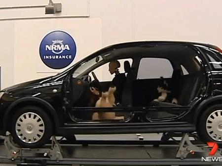 ペットを車に乗せる時どうしていますか?