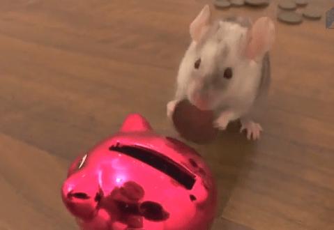 ネズミも貯金する時代