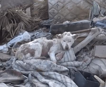 ゴミ捨て場で生きてきたワンコを救う