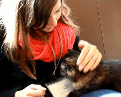 カナダ人女性が日本の猫カフェに来た