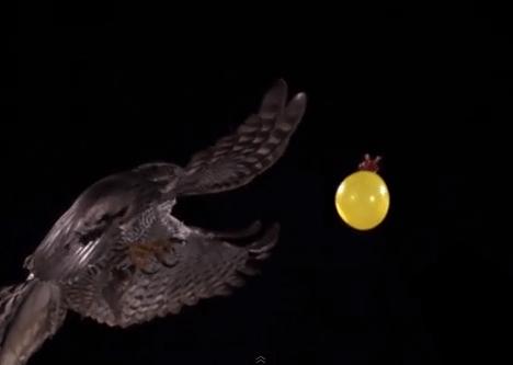 水風船にアタックする鷹のスローモーション映像