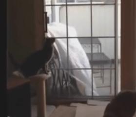 飼い主を驚かせた猫の行動