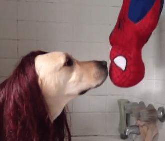 スパイダーマンを舐めるワンコ