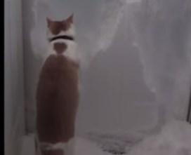 雪の壁と戦うニャンコ