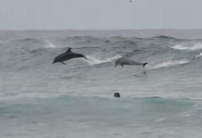 サーファーを驚かせたイルカの波乗り