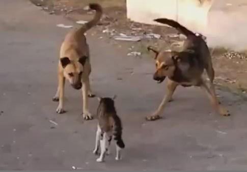 猫 vs. 犬の群れ