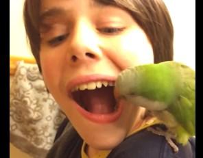 少年の乳歯を抜歯するオウム