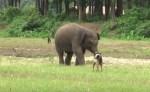 ゾウの赤ちゃん、付きまとうワンコにイライラ